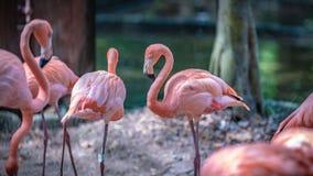 Animal cor-de-rosa pastel doce dos animais selvagens do flamingo fotografia de stock royalty free