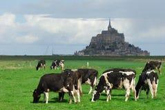Animal cow Stock Photo