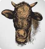 Animal cow, hand-drawing. Vector illustration. Stock Photos