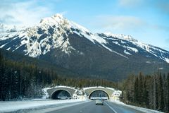 Free Animal Crossing Bridge Along The Trans Canada Highway Highway 1 In Banff National Park In Winter Stock Photos - 139565323