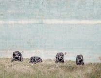 Animal cruelty Stock Image
