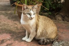 Cat pet animal cute mood. Animal cute face mammal kitty royalty free stock photography