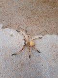 Animal d'araignée photographie stock
