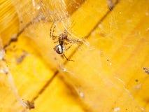 Animal d'arthropode d'araignée photographie stock