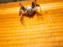 Animal d'arthropode d'araignée photos libres de droits