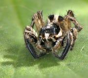 Animal d'arthropode d'araignée Image stock
