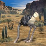 Animal d'Ostrich-3D Image libre de droits