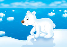 Animal d'ours blanc Photographie stock