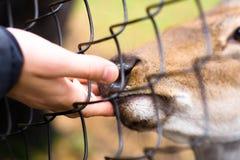 Animal da alimentação Foto de Stock