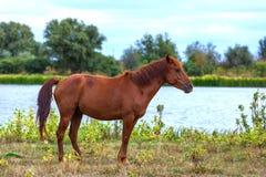 Animal dans le domaine de la région de l'Astrakan, Russie photo stock