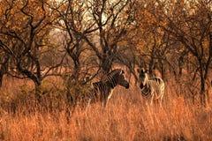 Animal, Dawn, Daylight Stock Image