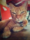 animal de animal de estimação do gato fotos de stock