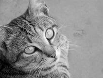 Animal de animal doméstico Fotos de archivo