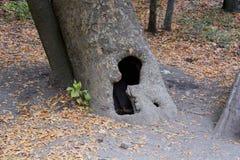 Animal de cabane dans un arbre Photographie stock libre de droits