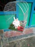 Animal de compagnie photographie stock libre de droits