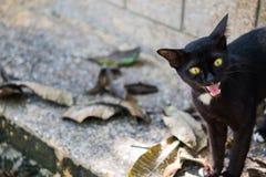 animal de compagnie de chat Image libre de droits