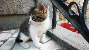 animal de compagnie de chat Photographie stock