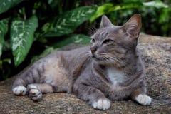 animal de compagnie de chat Images stock