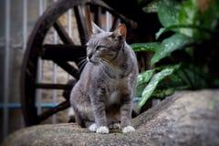 animal de compagnie de chat Photographie stock libre de droits