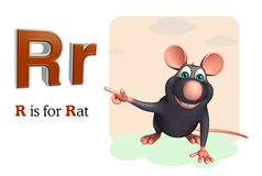 Animal de compagnie de rat avec l'alphabet Images stock