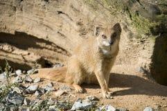 Animal de désert image libre de droits