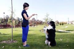 Animal de animal doméstico australiano del controlador de perro de Training Park Professional del pastor Fotografía de archivo