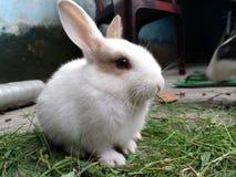 Animal de estimação bonito Fotos de Stock