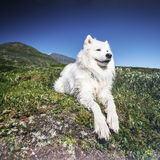 Animal de estimação com personalidade Fotos de Stock Royalty Free
