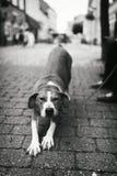 Animal de estimação com personalidade Imagens de Stock