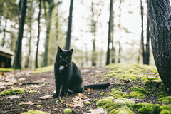 Animal de estimação com personalidade Imagens de Stock Royalty Free