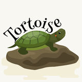 Animal de estimação da tartaruga para a casa, animal do réptil ilustração stock