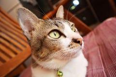animal de estimação da vaquinha do gatinho do gato fotos de stock