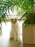 Animal de estimação do gato Imagens de Stock Royalty Free