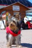 Animal de estimação e vestido Foto de Stock