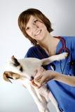 Animal de estimação e veterinário Fotos de Stock Royalty Free