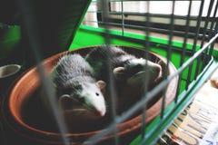 Animal de estimação encantador Fotos de Stock Royalty Free