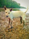 Animal de estimação ensolarado do cão da luz solar de pedra do mar do oceano imagem de stock