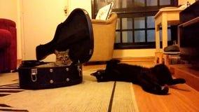 Animal de estimação fétido Fotografia de Stock Royalty Free
