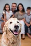Animal de estimação na sala de visitas e família que senta-se no sofá Fotografia de Stock Royalty Free
