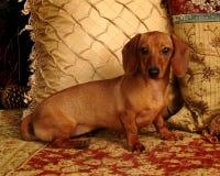 Animal de estimação Pampered fotos de stock