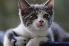 Animal de estimação pequeno Foto de Stock Royalty Free
