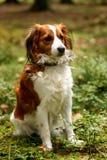 Animal de estimação em uma floresta Fotos de Stock