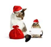 Animal de estimação engraçado do xmas, esquilo com placa e gato com chapéu de Santa e Imagens de Stock