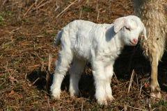 Animal de exploração agrícola fotografia de stock royalty free