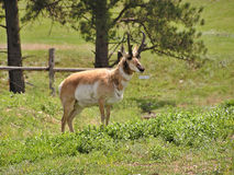 Animal de faune Photographie stock