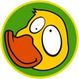 Animal de ferme - canard Photos libres de droits
