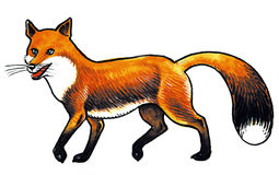 Animal de Fox Illustration Stock
