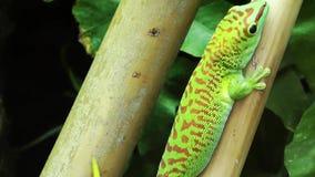 Animal de lézard vert sur l'arbre clips vidéos
