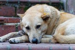 Animal de la calle fotografía de archivo
