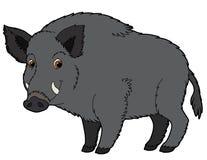 Animal de la historieta - verraco - ejemplo para los niños Imagen de archivo